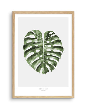Monstera Palm - Olive et Oriel