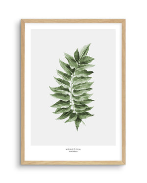 Monstera Subpinatta Palm - Olive et Oriel