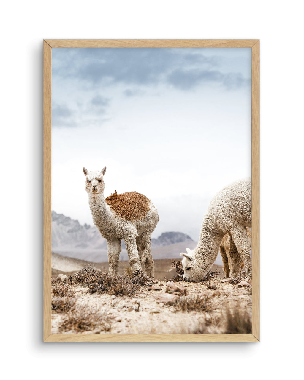 Mountain Llamas PT - Olive et Oriel | Shop Art Prints & Posters Online