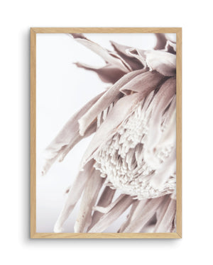 Neutral in Bloom | King Protea - Olive et Oriel | Shop Art Prints & Posters Online