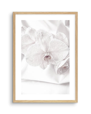 Orchids No 1 - Olive et Oriel | Shop Art Prints & Posters Online