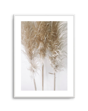 Pampas on Grey No 1 - Olive et Oriel | Shop Art Prints & Posters Online