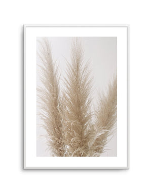Pampas on Grey No 2 - Olive et Oriel | Shop Art Prints & Posters Online