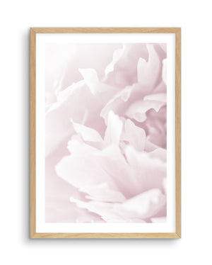 Peony In Bloom I - Olive et Oriel | Shop Art Prints & Posters Online