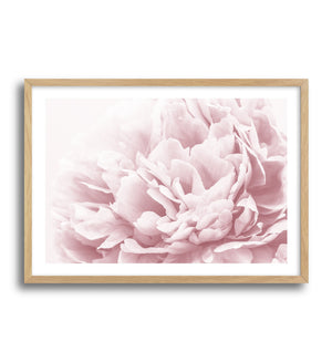 Peony In Bloom II - Olive et Oriel | Shop Art Prints & Posters Online