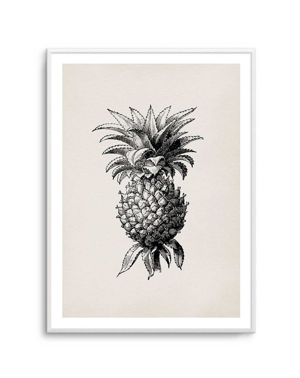 Pineapple Illustration - Olive et Oriel