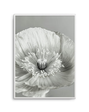 Poppy B&W No 1 - Olive et Oriel | Shop Art Prints & Posters Online
