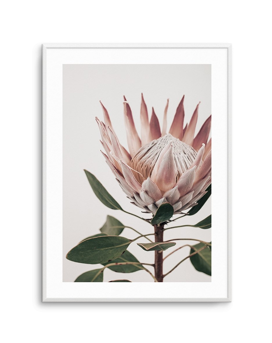 Protea in Overture No 1 - Olive et Oriel | Shop Art Prints & Posters Online