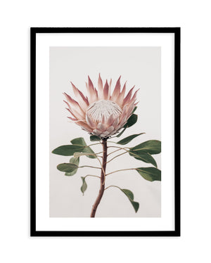 Protea in Overture No 2 - Olive et Oriel | Shop Art Prints & Posters Online
