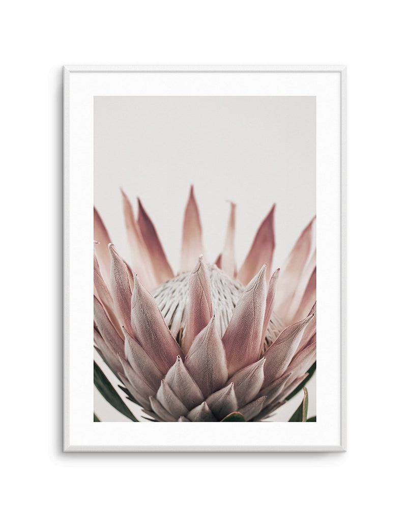 Protea in Overture No 3 - Olive et Oriel | Shop Art Prints & Posters Online