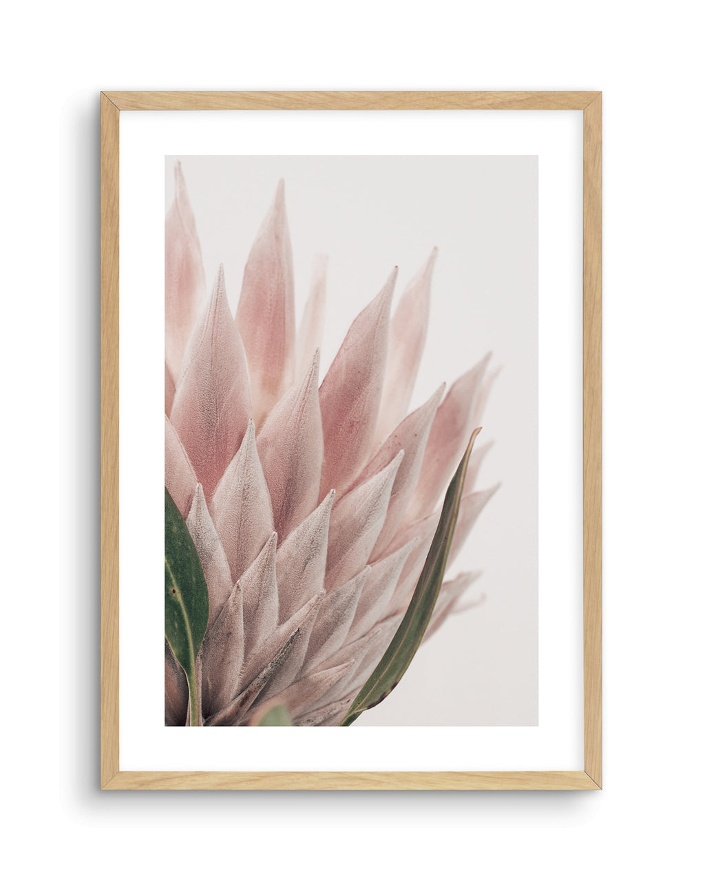 Protea in Overture No 4 - Olive et Oriel | Shop Art Prints & Posters Online