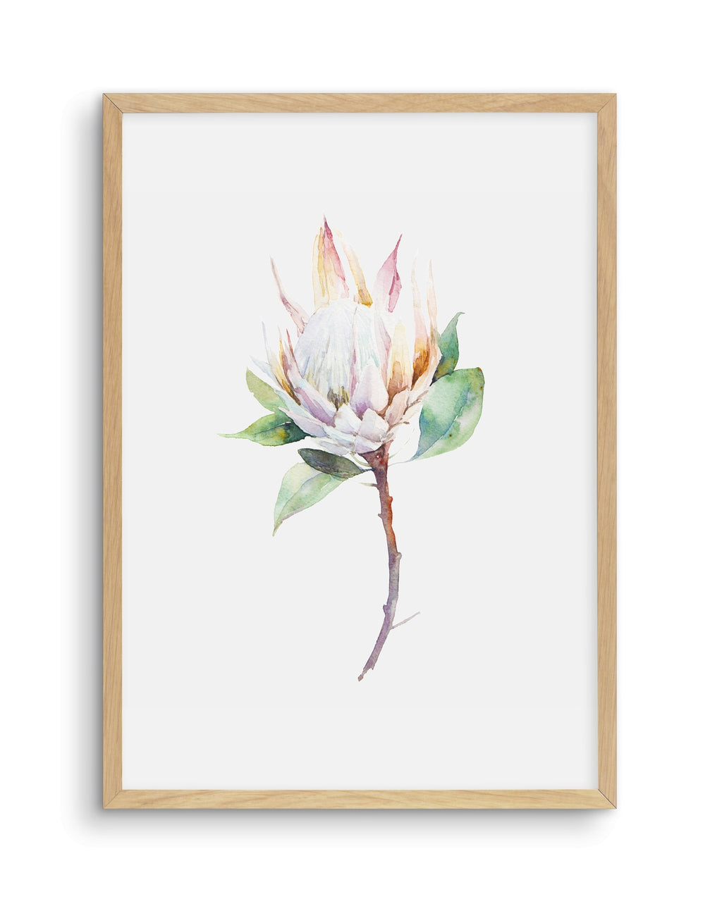 Protea in Watercolour - Olive et Oriel | Shop Art Prints & Posters Online
