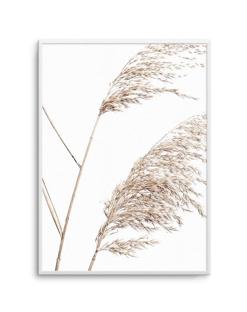 Sea Grass No I - Olive et Oriel | Shop Art Prints & Posters Online
