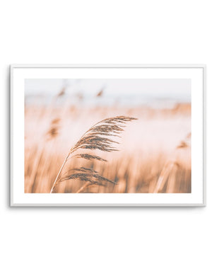 Seagrass In The Wind LS No 2 - Olive et Oriel | Shop Art Prints & Posters Online