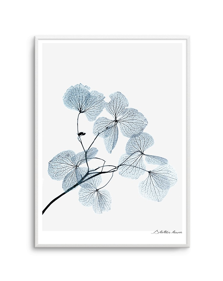 Skeleton Leaves - Olive et Oriel | Shop Art Prints & Posters Online