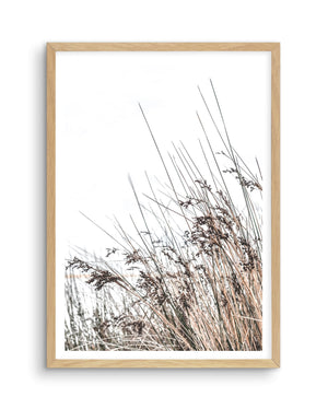 The Coast - Olive et Oriel | Shop Art Prints & Posters Online