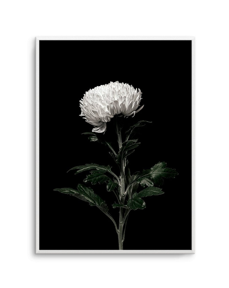 The White Flower PT - Olive et Oriel | Shop Art Prints & Posters Online