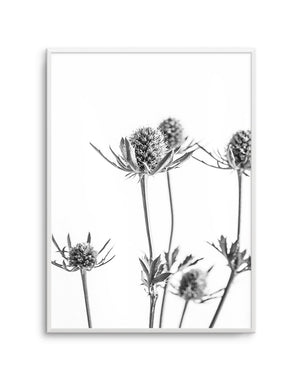 Thistle No. 1 - Olive et Oriel | Shop Art Prints & Posters Online