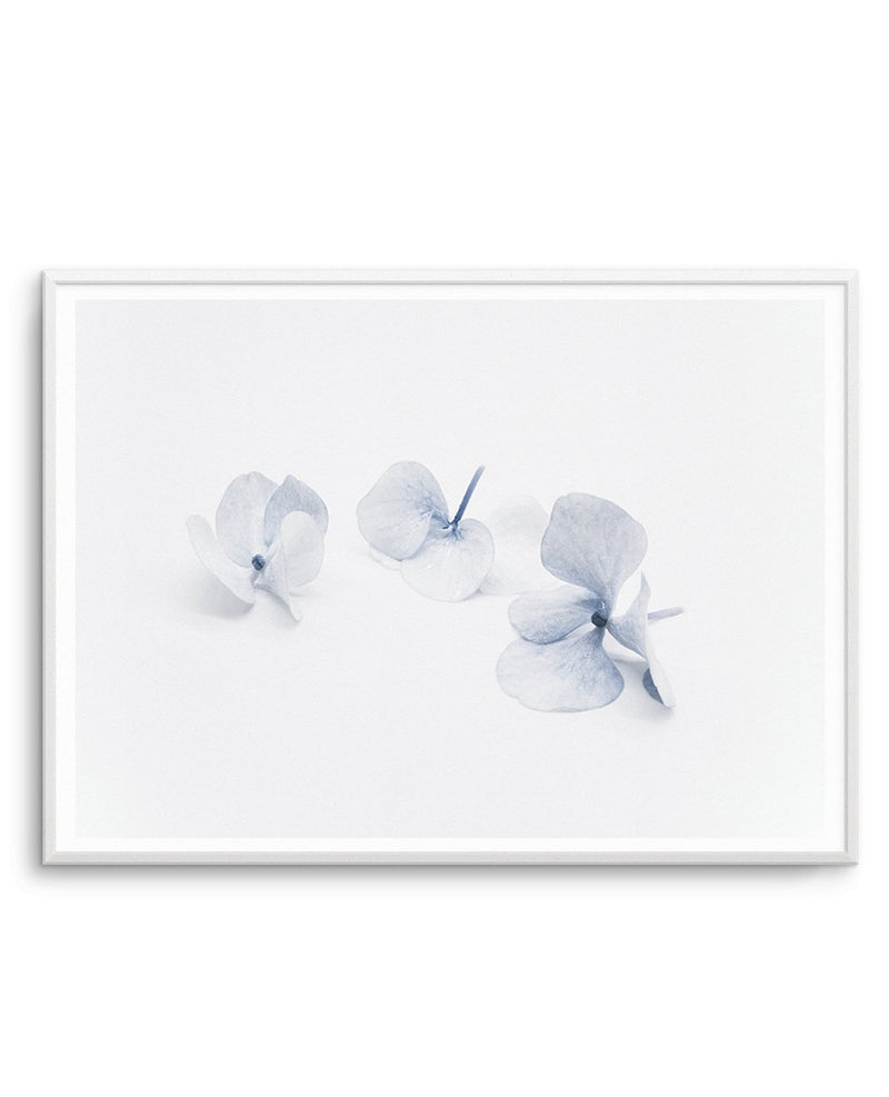 Three in Blue | Hydrangea III - Olive et Oriel | Shop Art Prints & Posters Online