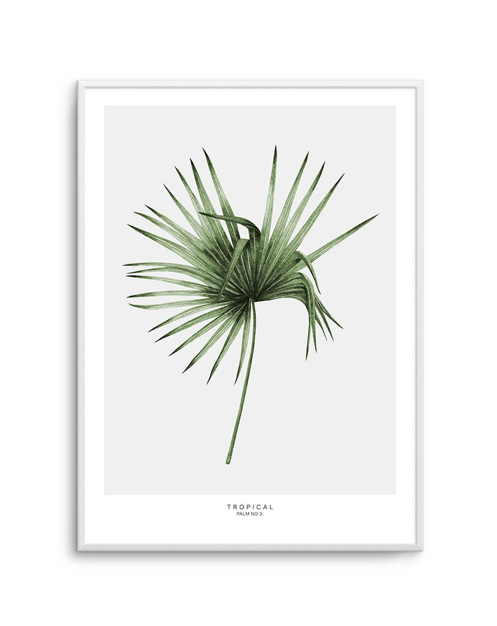 Tropical Palm NO 3 - Olive et Oriel