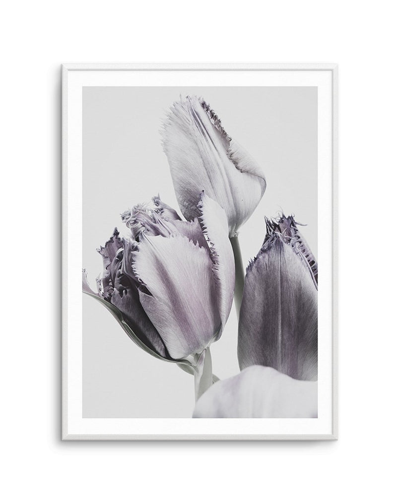 Tulips in Violet - Olive et Oriel | Shop Art Prints & Posters Online