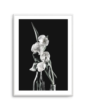 Tulips on Black No 2 - Olive et Oriel | Shop Art Prints & Posters Online