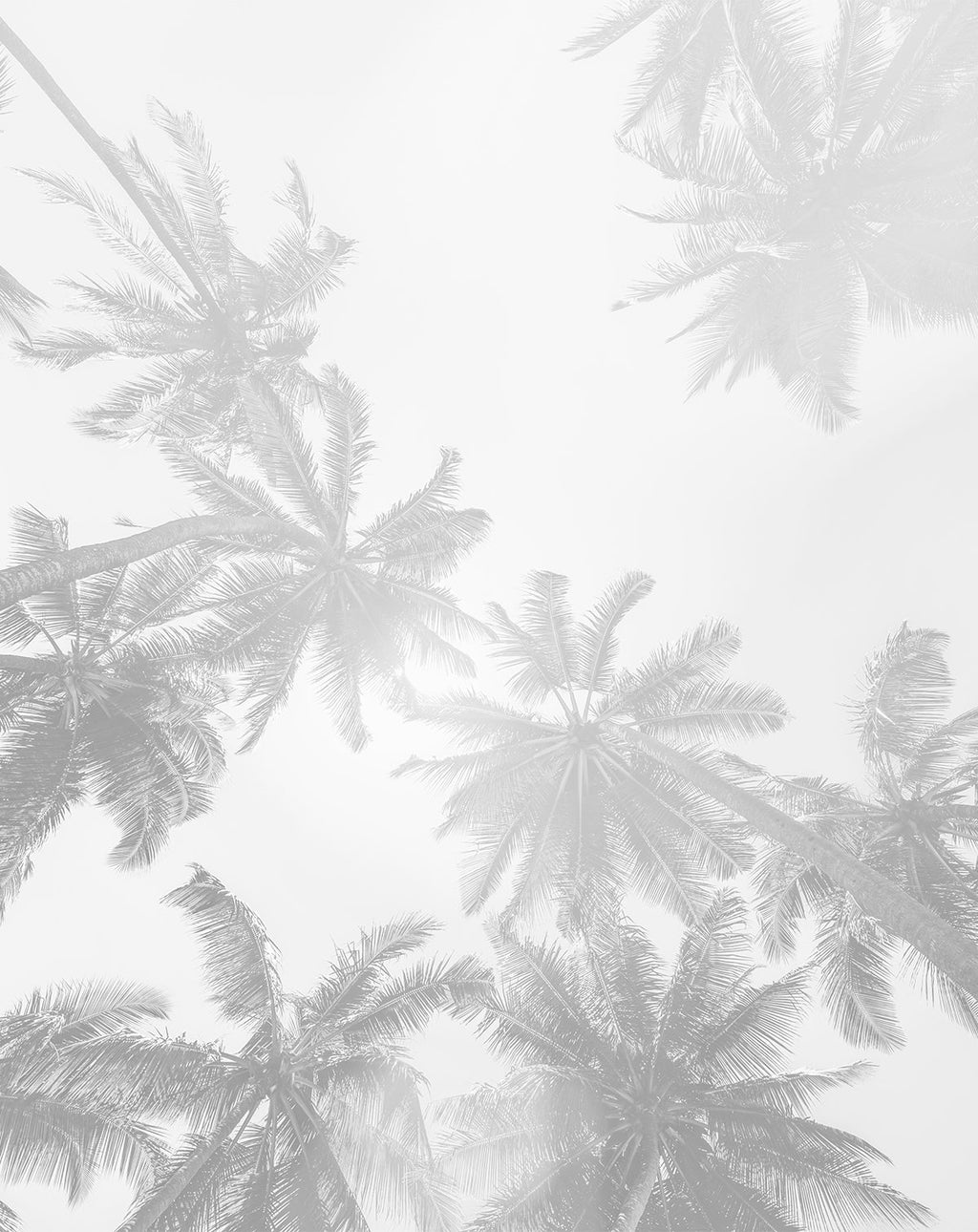 Under the Palms Monochrome Wallpaper Mural - Olive et Oriel