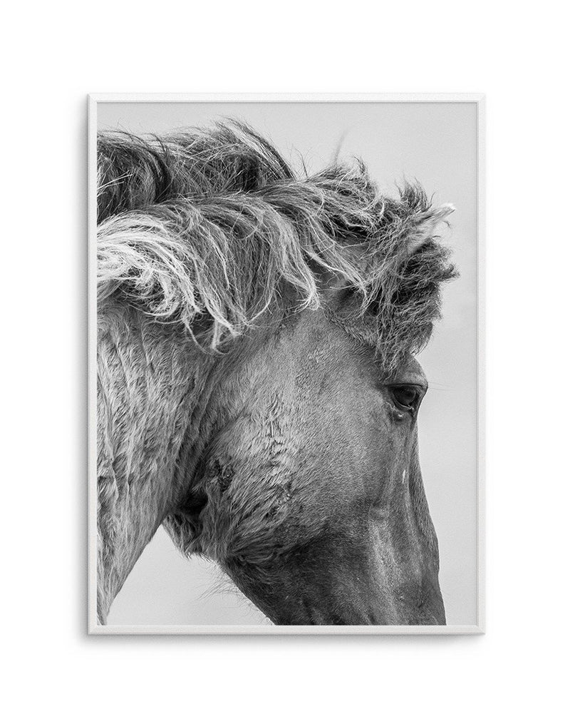 Wild Horse Close-up - Olive et Oriel | Shop Art Prints & Posters Online