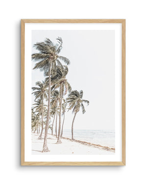 Windy Palms - Olive et Oriel