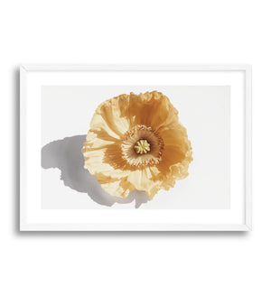 Yellow Poppy - Olive et Oriel | Shop Art Prints & Posters Online
