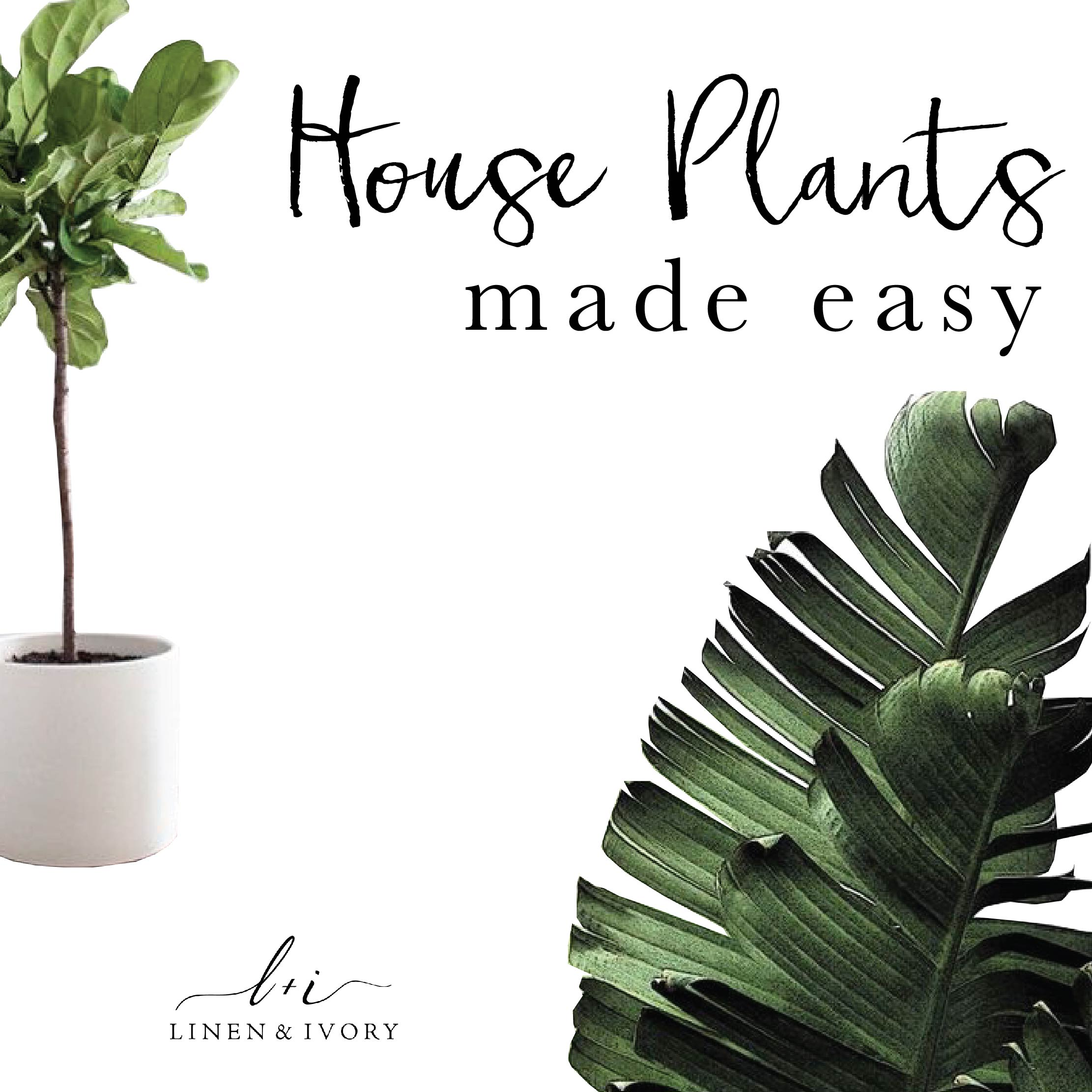 House Plants Made Easy
