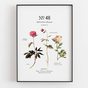 Peonies Botanical Art Prints (Set of 3) - Linen and Ivory