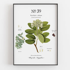 Hydrangea & Eucalyptus Botanical Art Prints (Set of 3) - Linen and Ivory