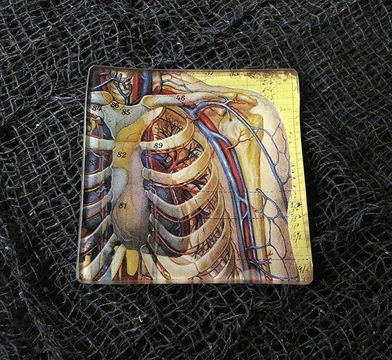 Lungs and Ribs Anatomy Glass Tray