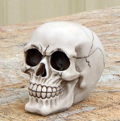 Realistic Replica Human Skull Statue Sculpture Figure Skeleton LIMITED