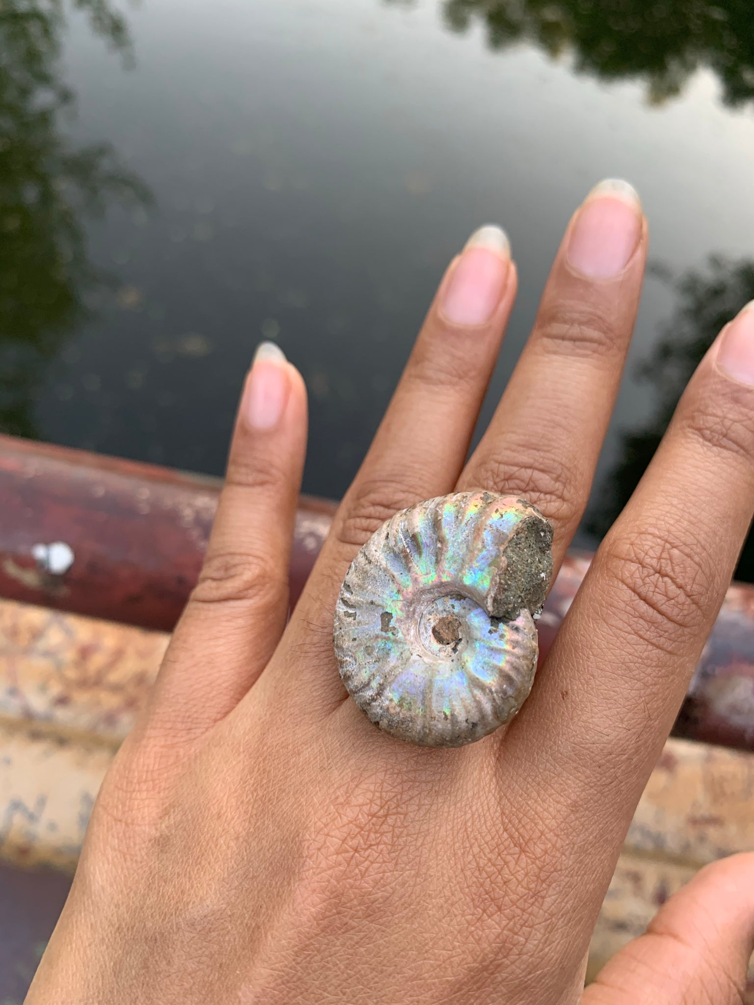 Opalized Ammonite & Pyrite Ring