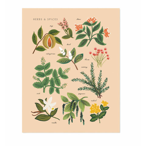 rifle-paper-co-herbs-&-spices-peach-print-01