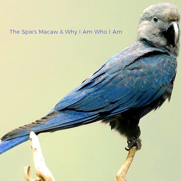 Lifestyle  |  The Spix's Macaw & Why I Am Who I Am