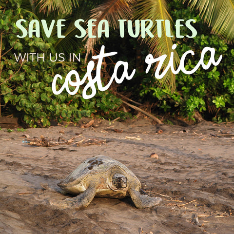 Saving Sea Turtles in Costa Rica
