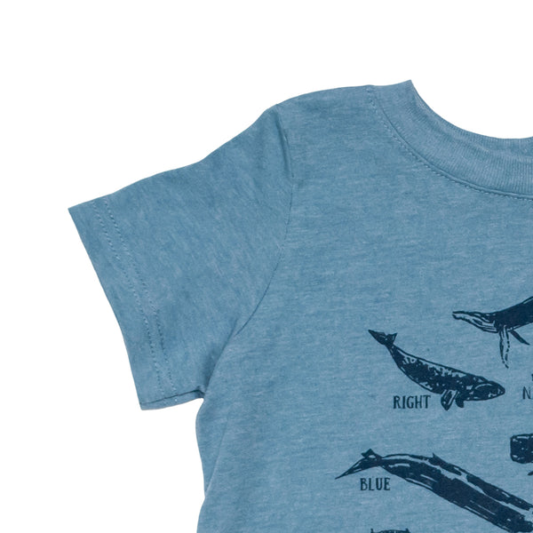Whale Species Chart Toddler Tee