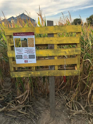 Cache River Corn Maze educating visitors about the Arkansas rice industry