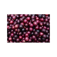 7 Red Scuppernong/Muscadine Grape Seeds-1230