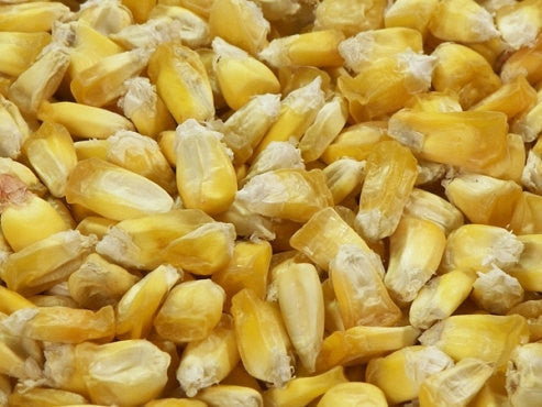 35 Giant Peruvian Popping Corn Seed-1215