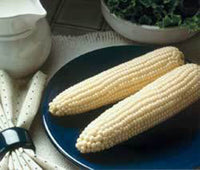 50 Robs Super Sweet white corn seeds-1052