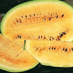 10 Desert Watermelon Seeds-1158