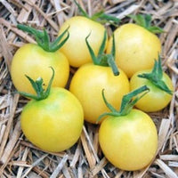 25 Whitest Cherry Tomato Seeds-1199