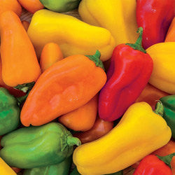 20 Mini Rainbow Pepper Mix-1318