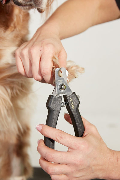 Andis Premium Dog Nail Clipper, Large