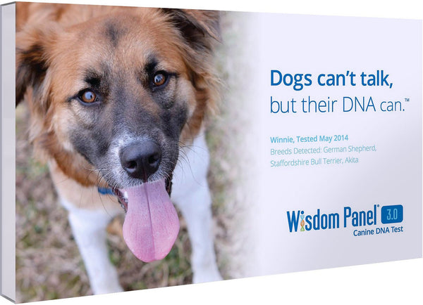 Wisdom Panel 3.0 Breed Identification DNA Test Kit for Dogs