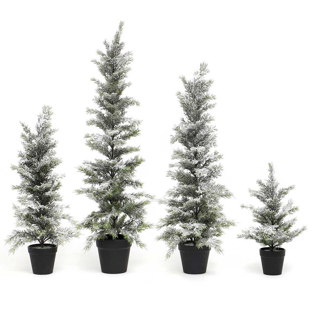 Snowed Evergreen Trees in Black Pot